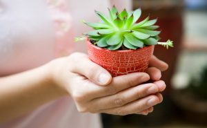 A woman wearing pink holds a fresh succulent plant