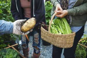 Community Gardening - basket of produce